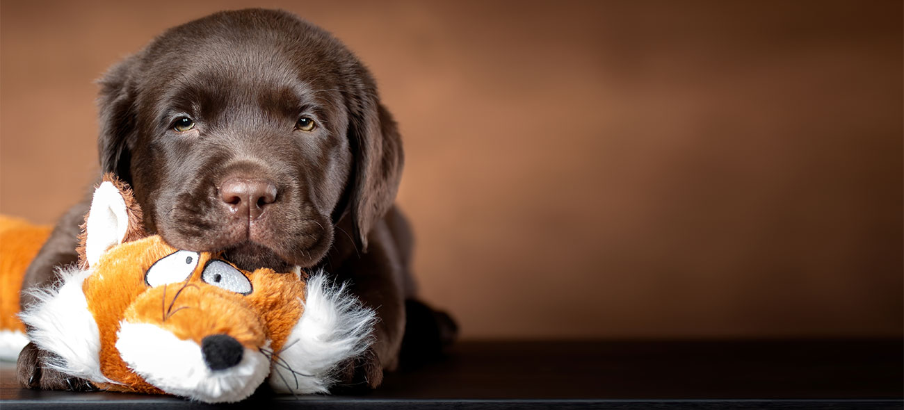 Lonely puppy with plush toy